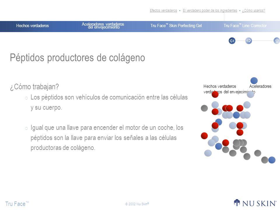 Péptidos productores de colágeno