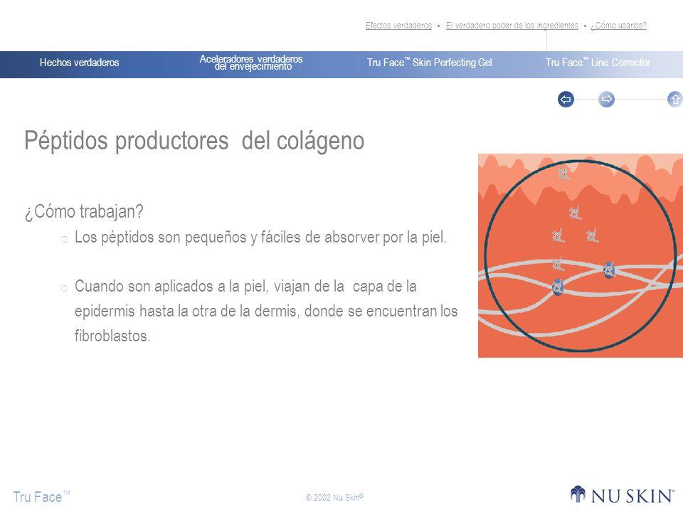 Péptidos productores del colágeno