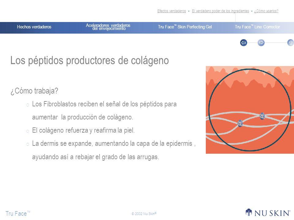Los péptidos productores de colágeno