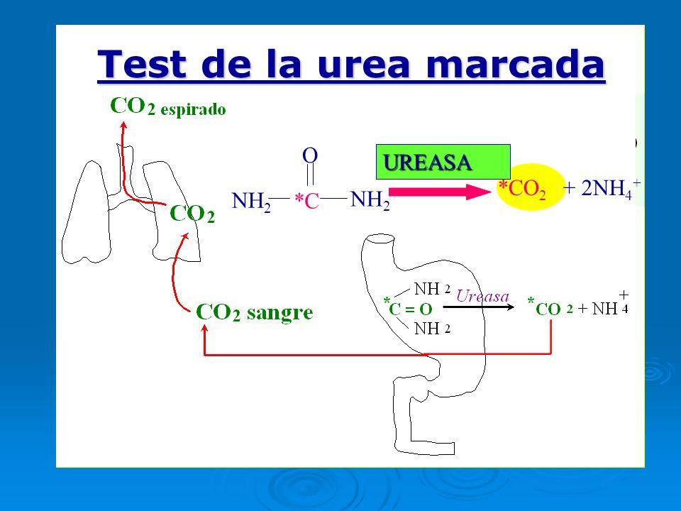 Test de la urea marcada O O UREASA UREASA *CO2 + 2NH4+ NH2 *C NH2 NH2
