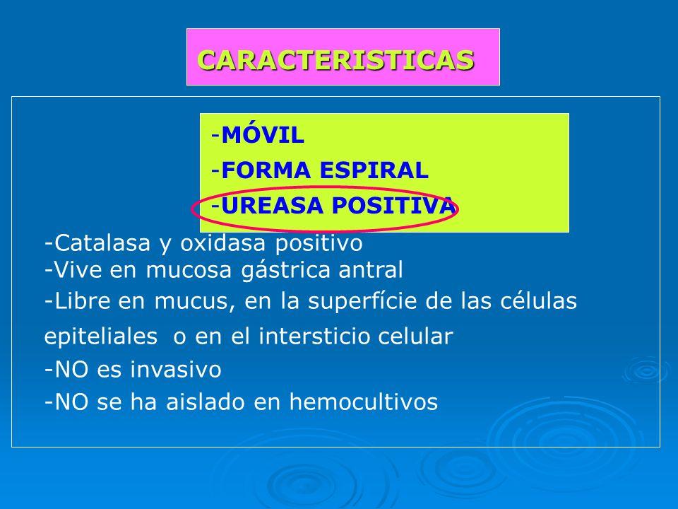 CARACTERISTICAS MÓVIL FORMA ESPIRAL UREASA POSITIVA
