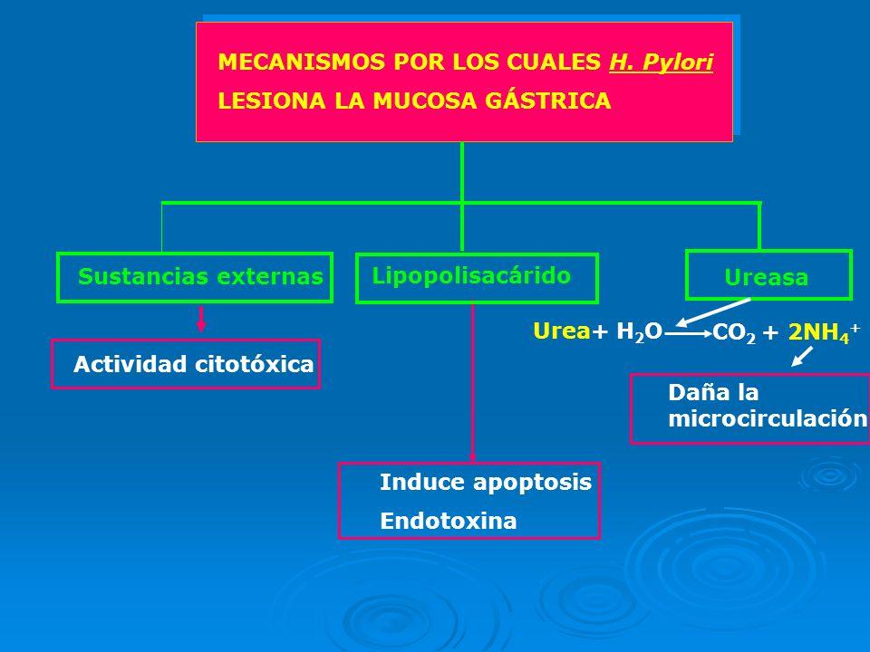 MECANISMOS POR LOS CUALES H. Pylori
