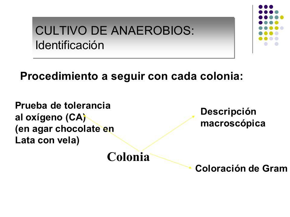 CULTIVO DE ANAEROBIOS: Identificación