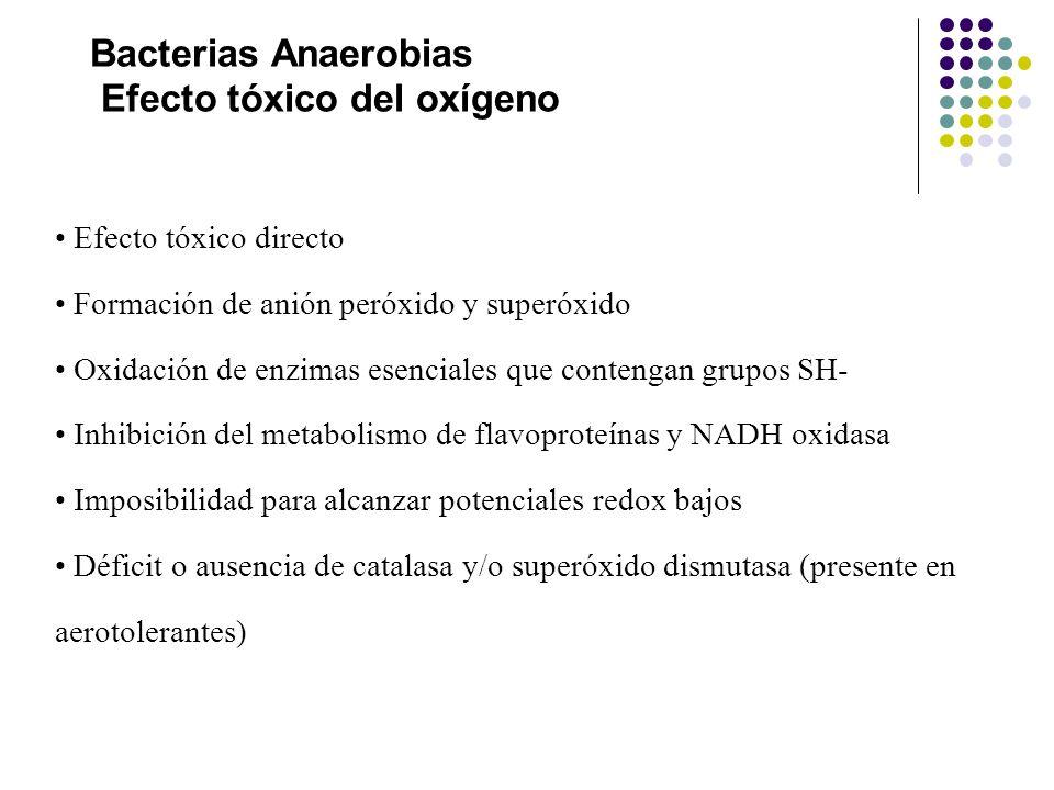 Bacterias Anaerobias Efecto tóxico del oxígeno