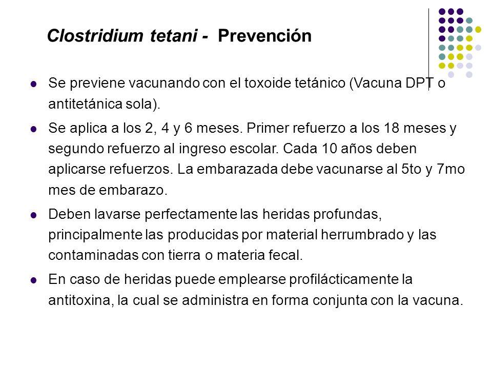 Clostridium tetani - Prevención