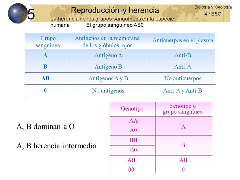 5 Reproducción y herencia A, B dominan a O A, B herencia intermedia