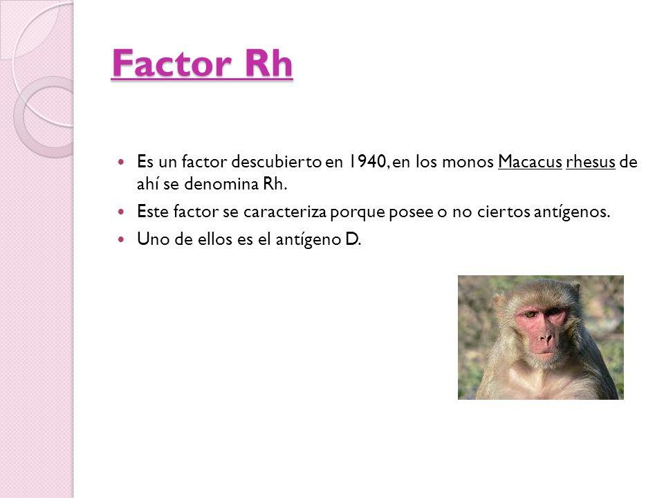 Factor Rh Es un factor descubierto en 1940, en los monos Macacus rhesus de ahí se denomina Rh.