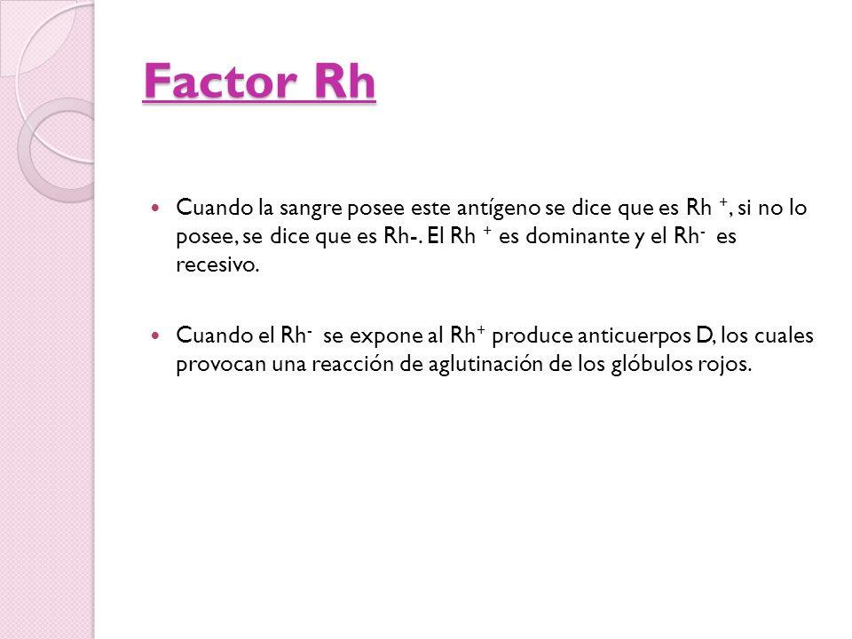 Factor Rh Cuando la sangre posee este antígeno se dice que es Rh +, si no lo posee, se dice que es Rh-. El Rh + es dominante y el Rh- es recesivo.