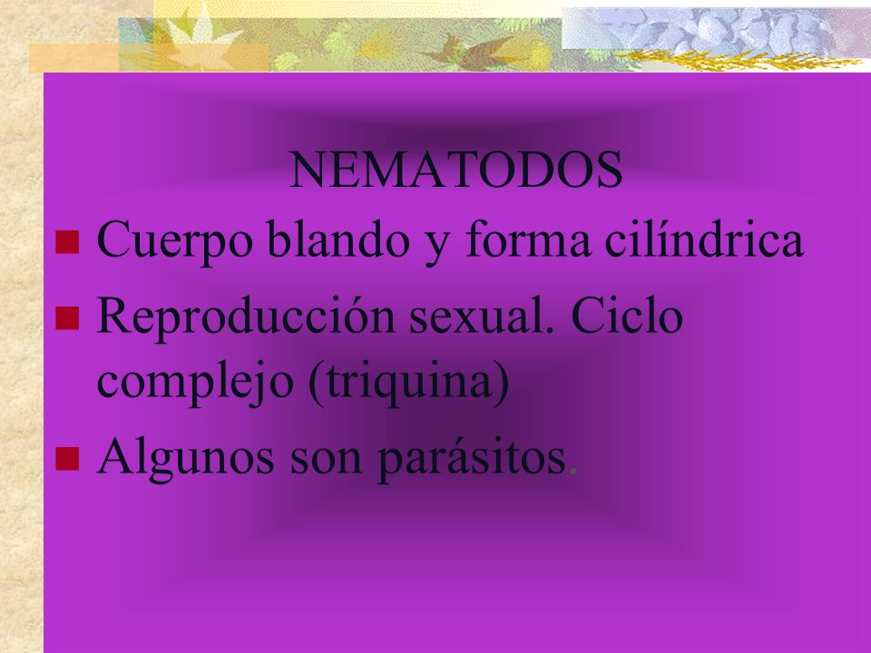 NEMATODOS Cuerpo blando y forma cilíndrica. Reproducción sexual.