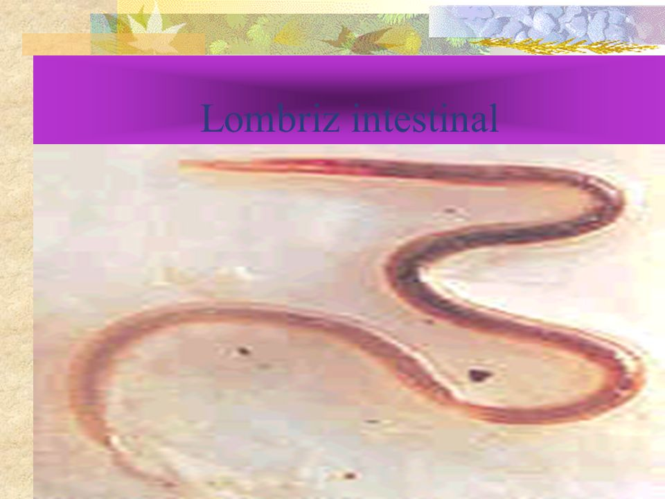 Lombriz intestinal