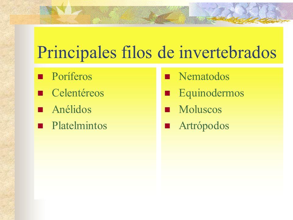 Principales filos de invertebrados