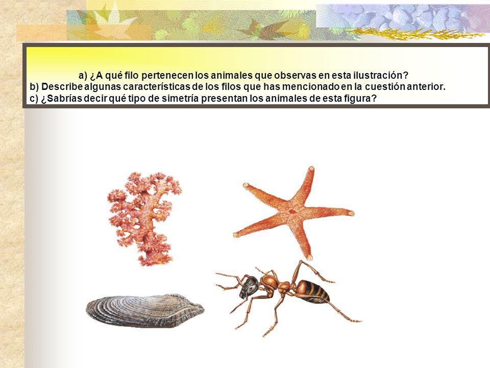 a) ¿A qué filo pertenecen los animales que observas en esta ilustración.