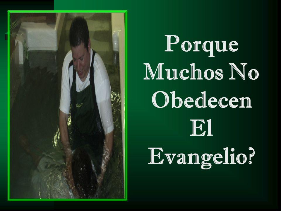 Porque Muchos No Obedecen El Evangelio