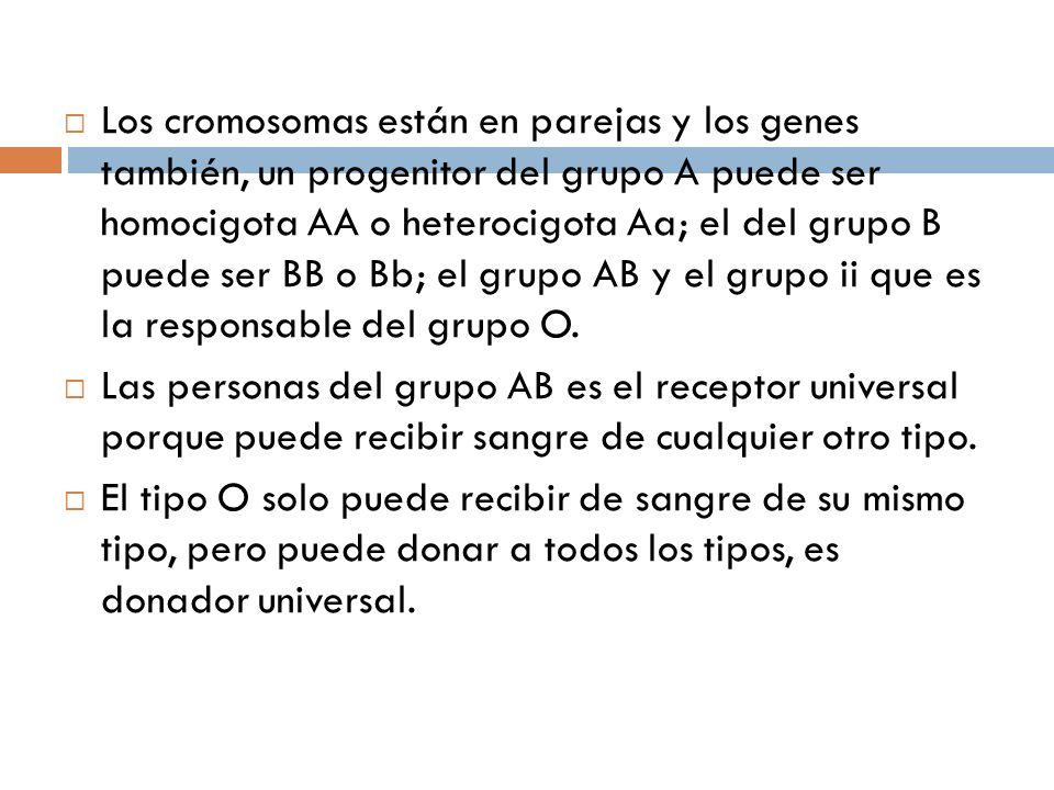 Los cromosomas están en parejas y los genes también, un progenitor del grupo A puede ser homocigota AA o heterocigota Aa; el del grupo B puede ser BB o Bb; el grupo AB y el grupo ii que es la responsable del grupo O.