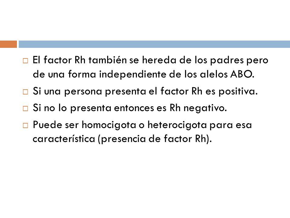 El factor Rh también se hereda de los padres pero de una forma independiente de los alelos ABO.
