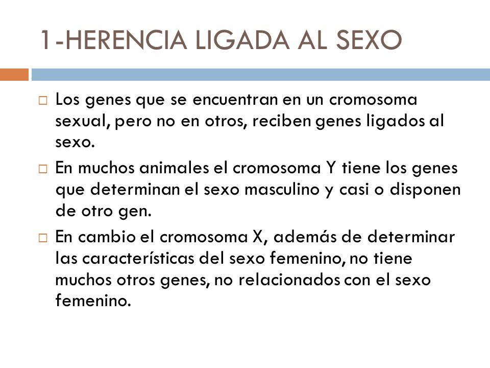 1-HERENCIA LIGADA AL SEXO
