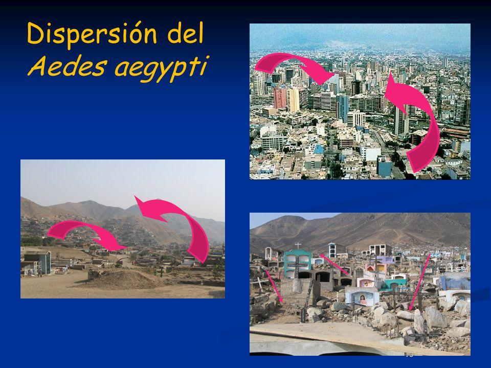 Dispersión del Aedes aegypti
