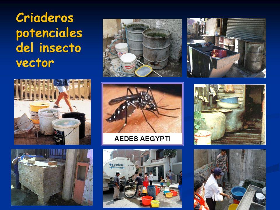 Criaderos potenciales del insecto vector AEDES AEGYPTI