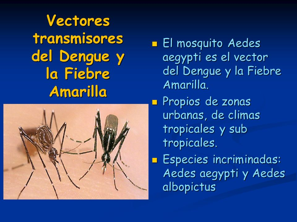 Vectores transmisores del Dengue y la Fiebre Amarilla