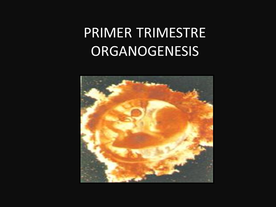 PRIMER TRIMESTRE ORGANOGENESIS