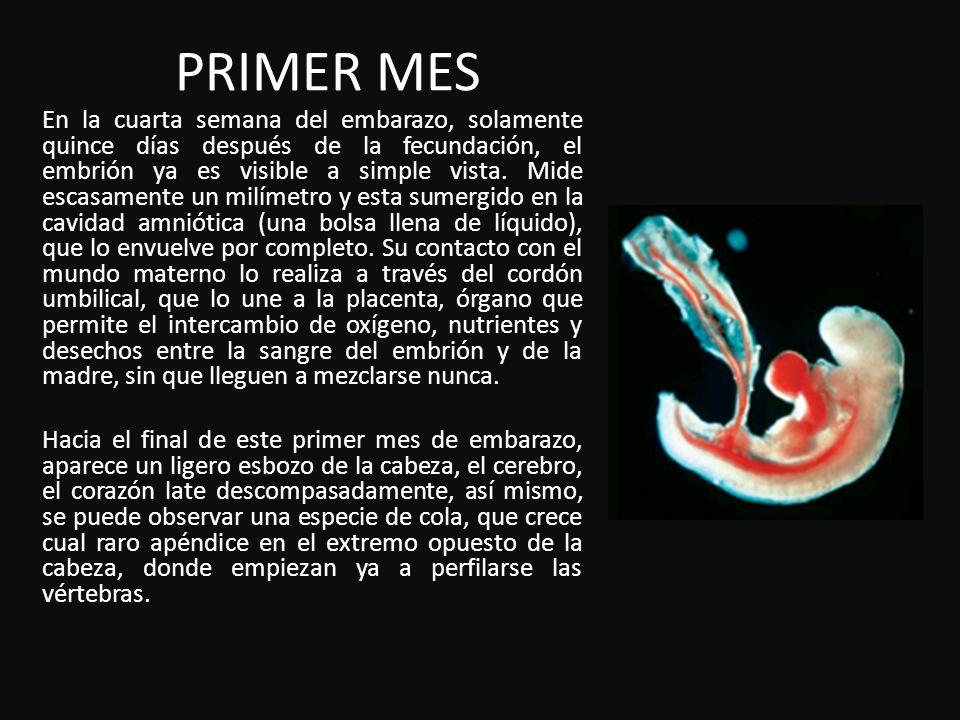 PRIMER MES