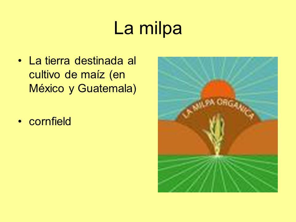 La milpa La tierra destinada al cultivo de maíz (en México y Guatemala) cornfield