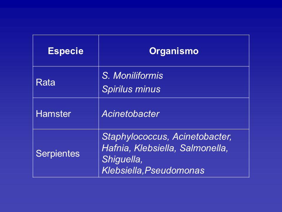 Especie Organismo. Rata. S. Moniliformis. Spirilus minus. Hamster. Acinetobacter. Serpientes.