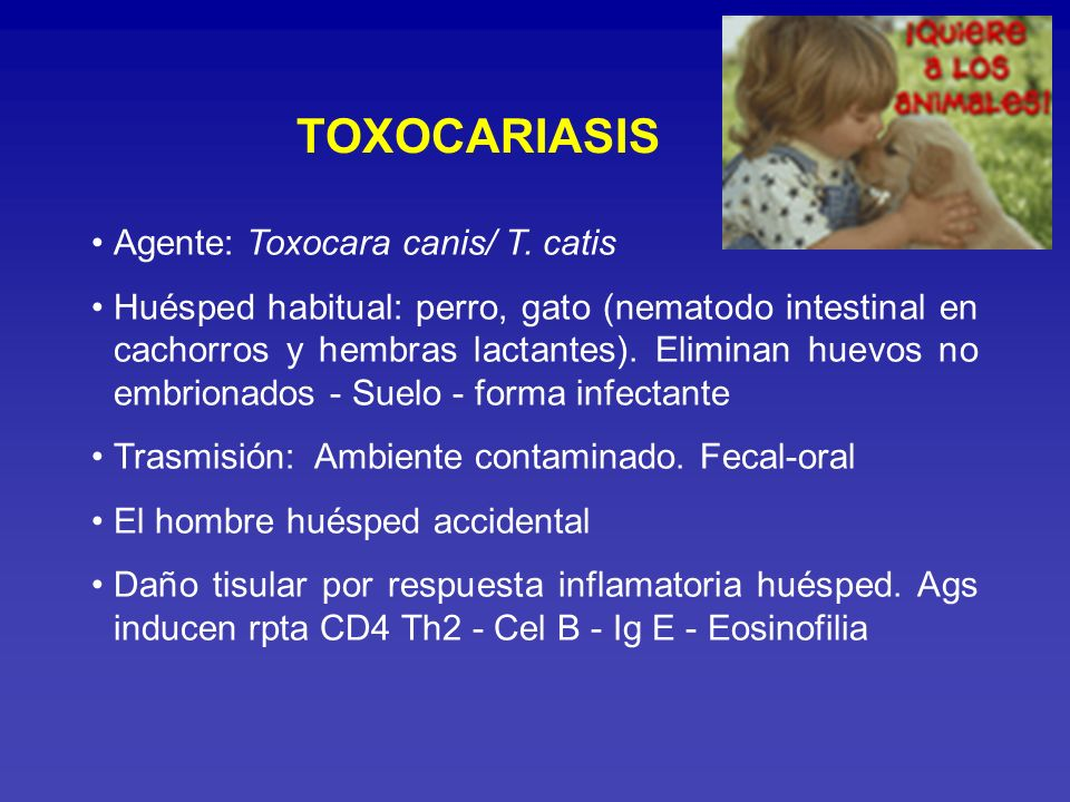 TOXOCARIASIS Agente: Toxocara canis/ T. catis