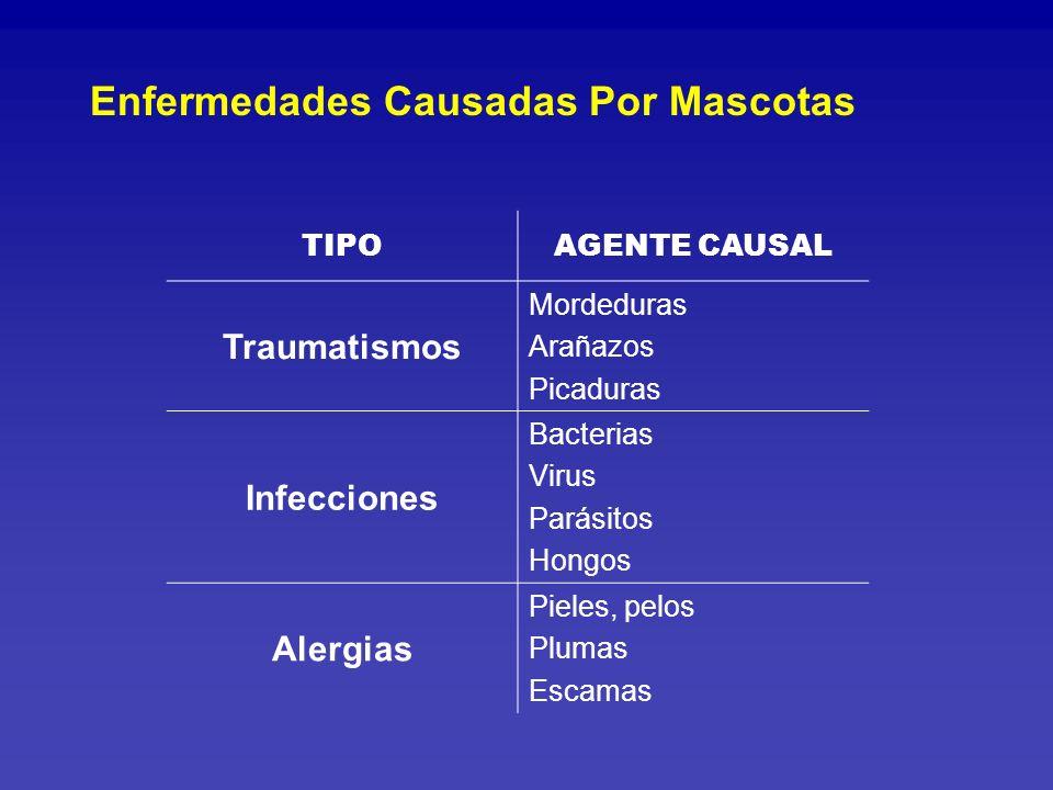 Enfermedades Causadas Por Mascotas
