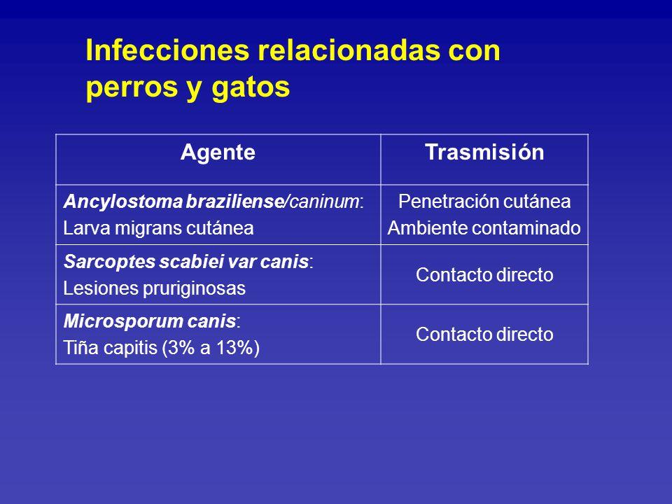 Infecciones relacionadas con perros y gatos