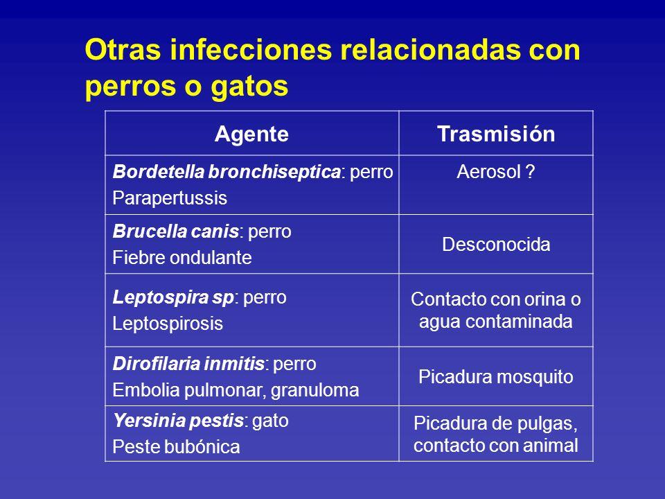 Otras infecciones relacionadas con perros o gatos