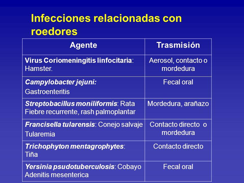 Infecciones relacionadas con roedores