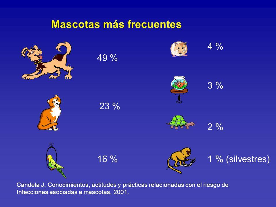Mascotas más frecuentes