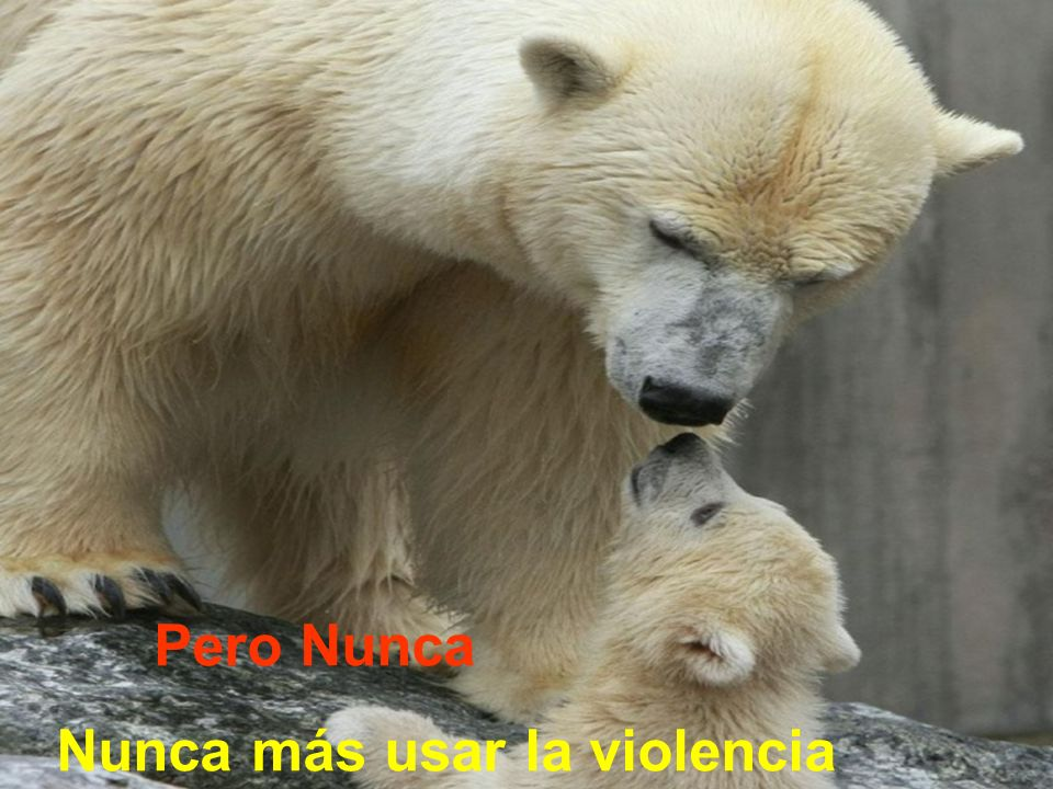Pero Nunca Nunca más usar la violencia