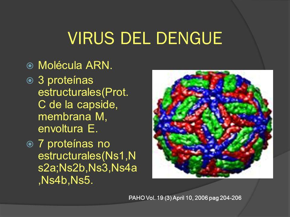 VIRUS DEL DENGUE Molécula ARN.
