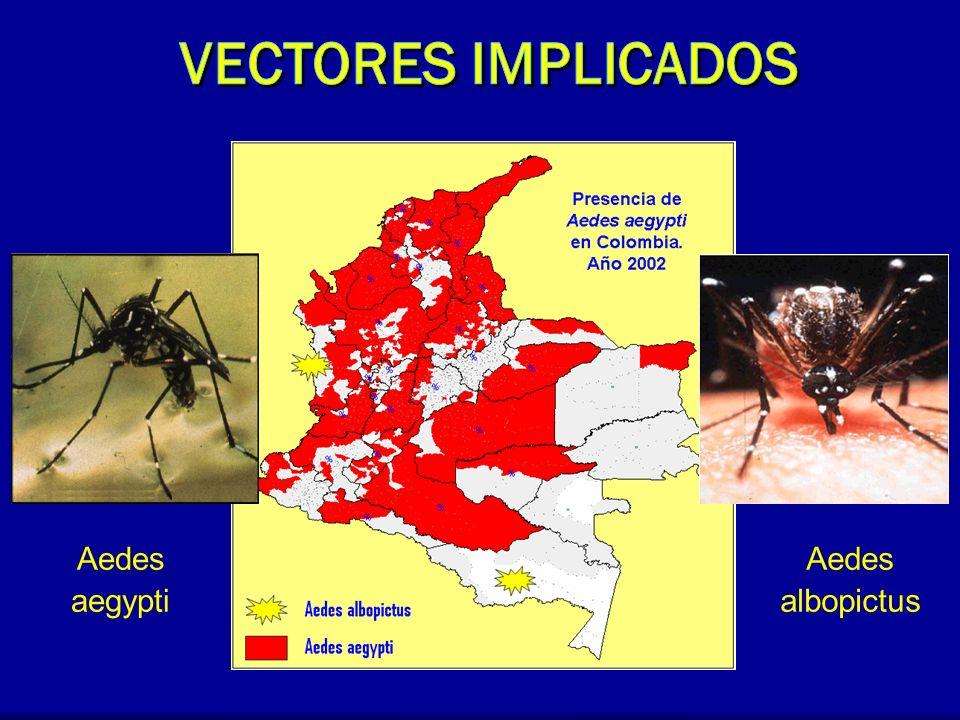 Vectores Implicados Aedes aegypti Aedes albopictus