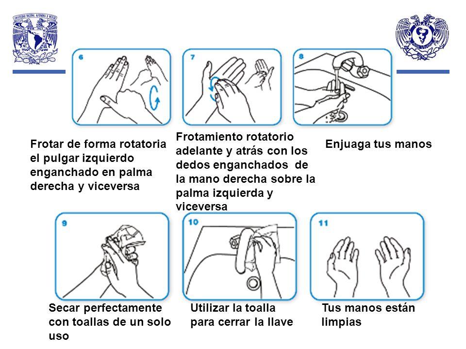 Frotamiento rotatorio adelante y atrás con los dedos enganchados de la mano derecha sobre la palma izquierda y viceversa
