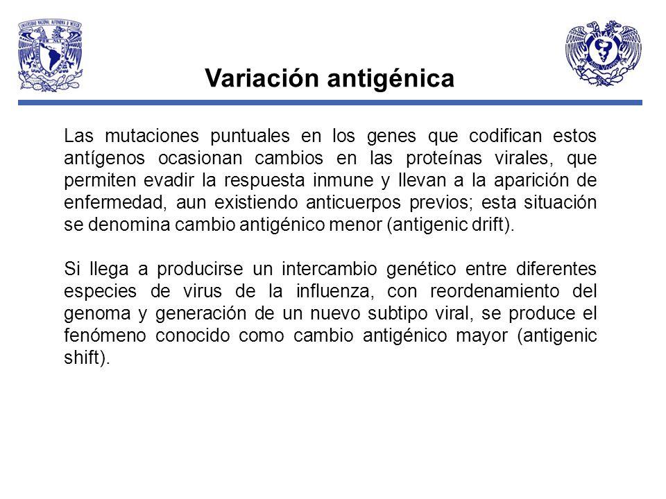 Variación antigénica