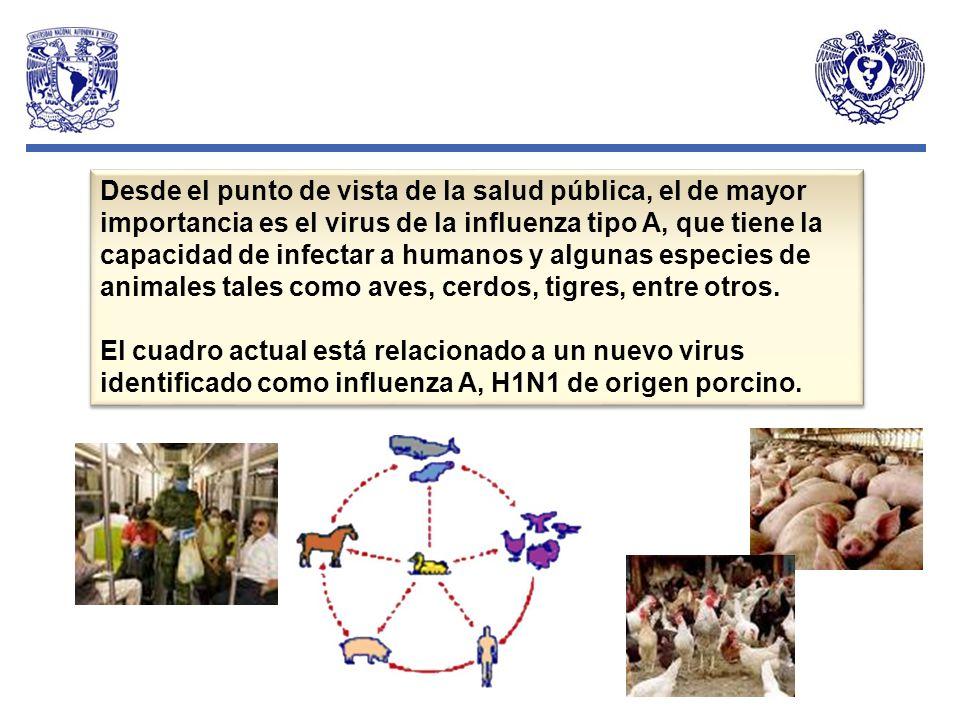 Desde el punto de vista de la salud pública, el de mayor importancia es el virus de la influenza tipo A, que tiene la capacidad de infectar a humanos y algunas especies de animales tales como aves, cerdos, tigres, entre otros.