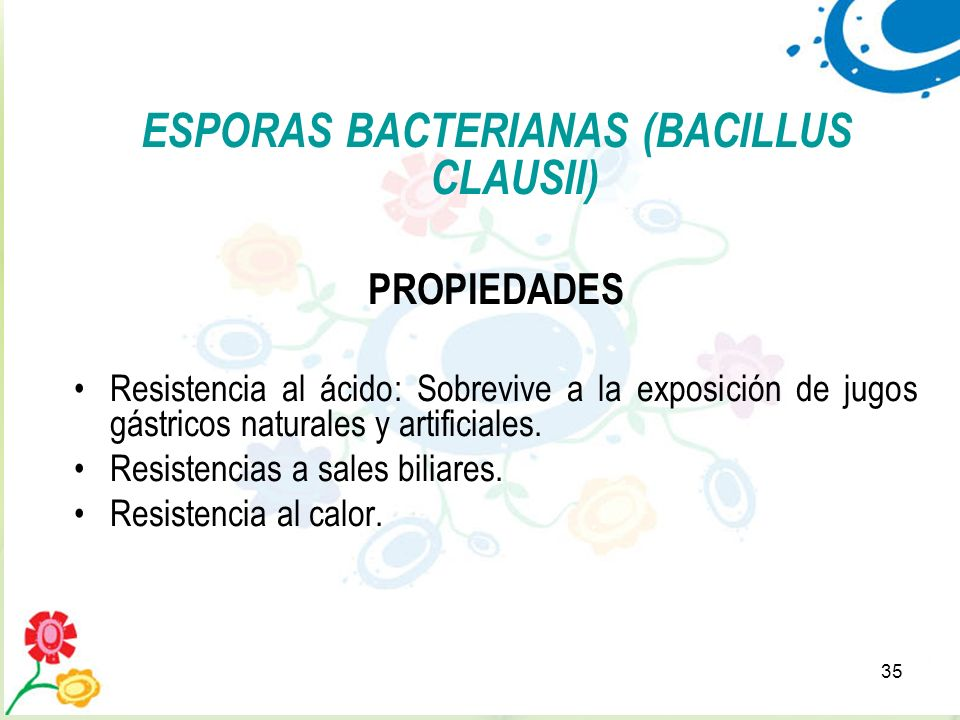 ESPORAS BACTERIANAS (BACILLUS CLAUSII)
