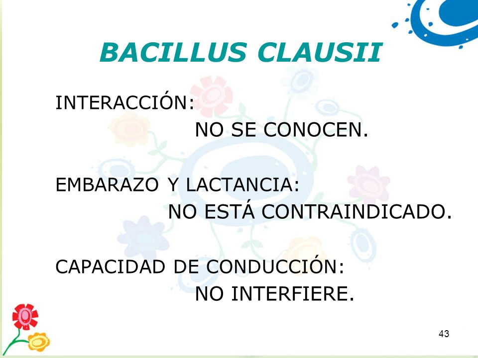 BACILLUS CLAUSII NO SE CONOCEN. NO ESTÁ CONTRAINDICADO. NO INTERFIERE.