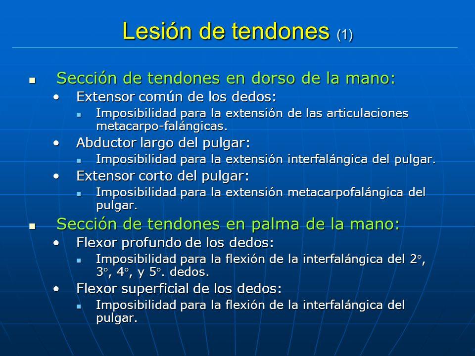 Lesión de tendones (1) Sección de tendones en dorso de la mano: