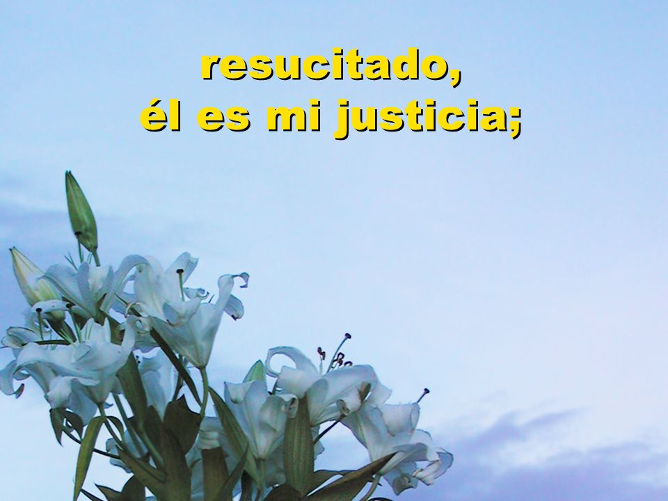 resucitado, él es mi justicia;