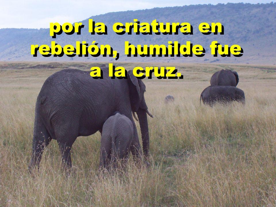 por la criatura en rebelión, humilde fue a la cruz.