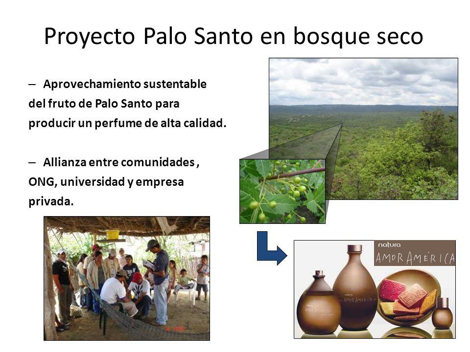 Proyecto Palo Santo en bosque seco