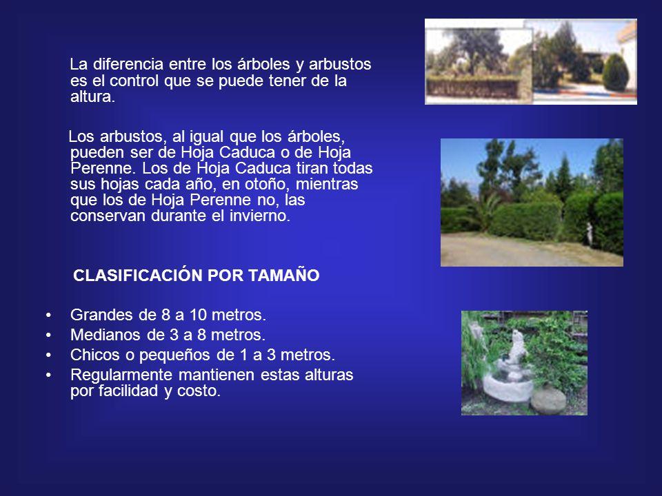 Arbustos ppt descargar for Diferencia entre arboles de hoja caduca y hoja perenne