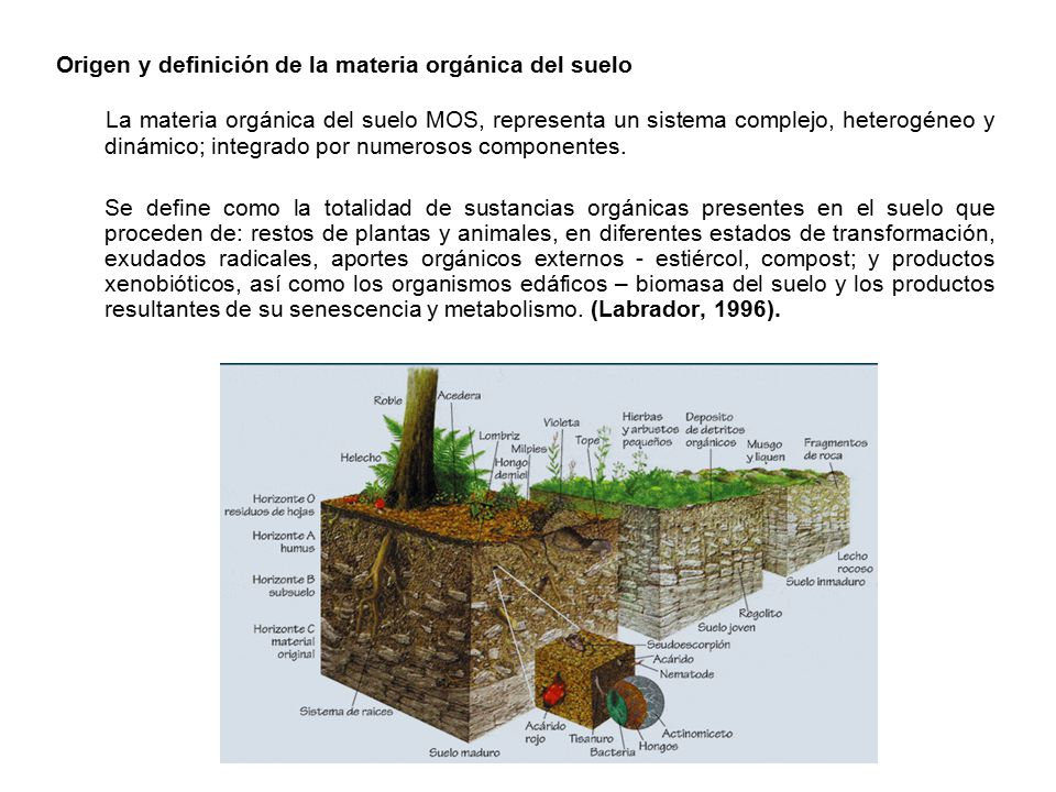 Materia organica del suelo ppt descargar for Informacion sobre el suelo