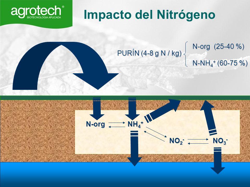 Impacto del Nitrógeno N-org (25-40 %) N-NH4+ (60-75 %)