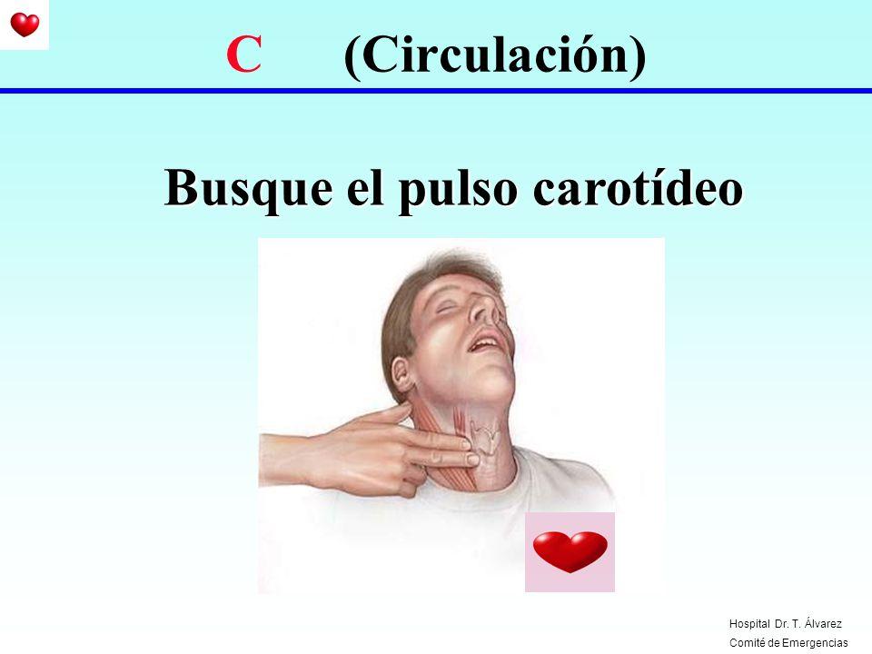 Busque el pulso carotídeo