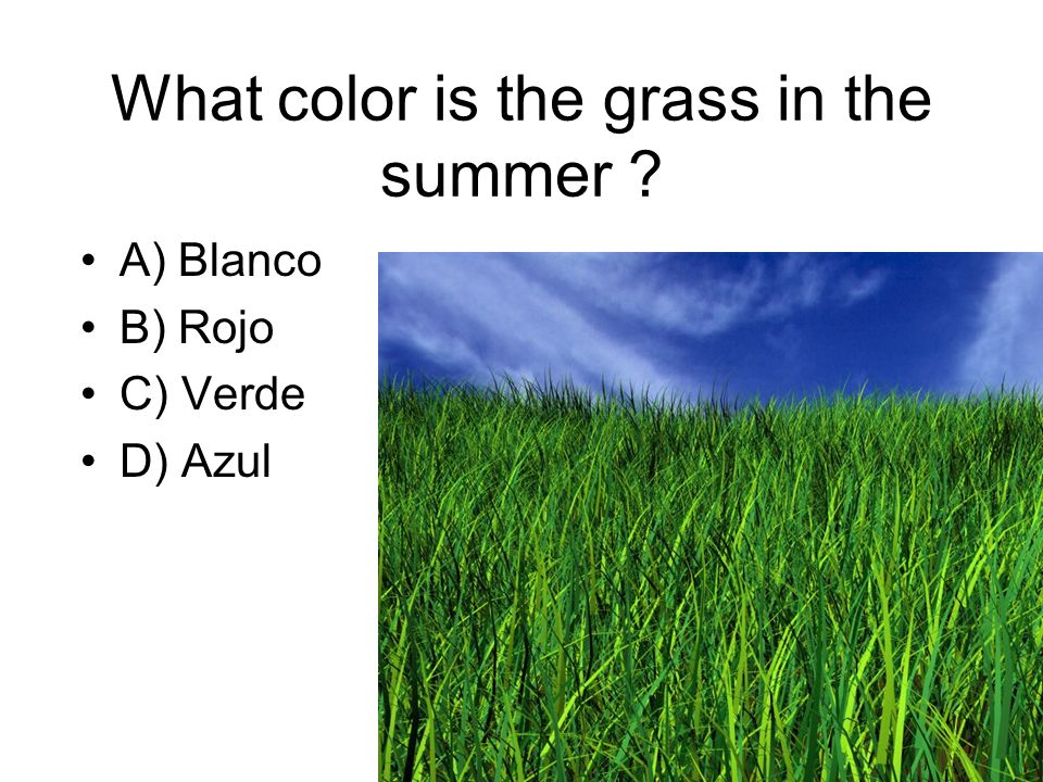 What color is the grass in the summer